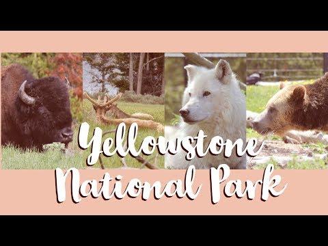 Yellowstone National Park - Animals Encountered - Summer 2018