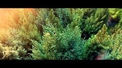 Plantagen Trädgårdsmästarefilm Sverige