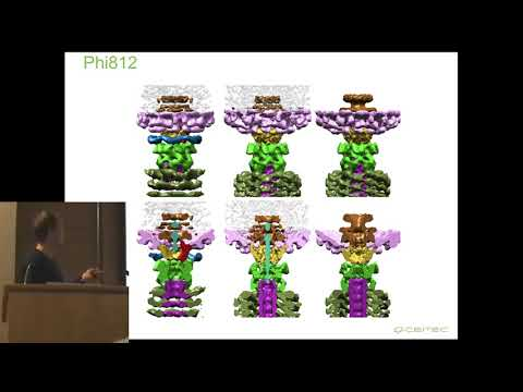 Structure and genome delivery mechanism of bacteriophage phi812 Jirak Novacek