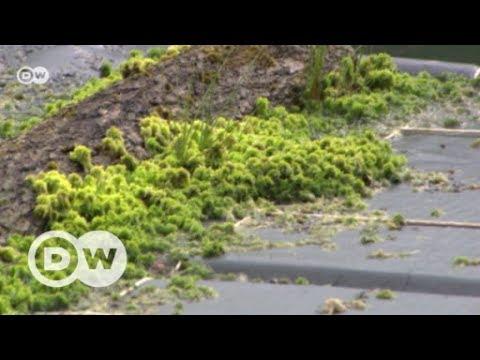Bringing a bog back to life | DW English