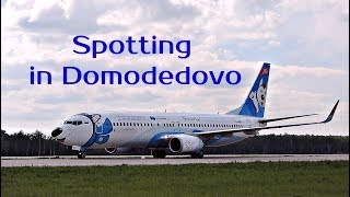 Official spotting in Domodedovo 2017