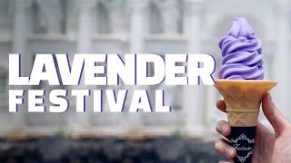 허브아일랜드 보랏빛 라벤더축제 100% 즐기는 방법!