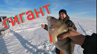 Поймали ОКУНЯ ГИГАНТА рыбалка в Узунколь