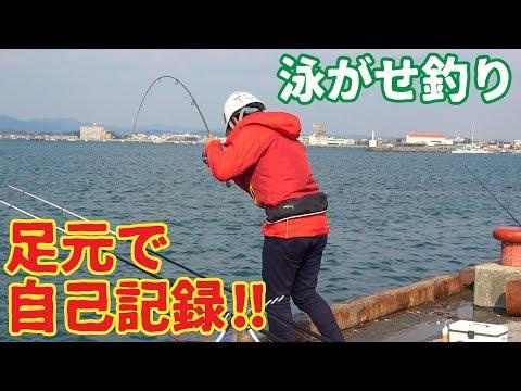 小魚の泳がせ釣りをしたら足元で150㎝の魚が釣れた