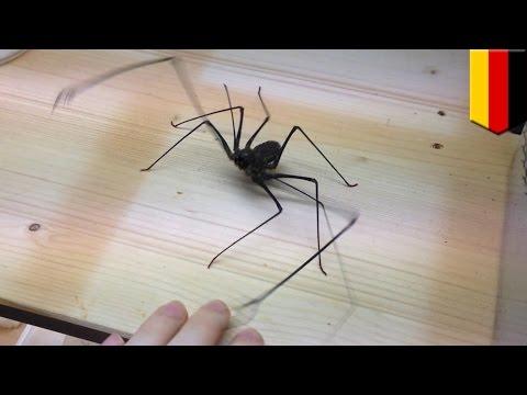 แมงมุมแส้โจมตี ชายเยอรมันถ่ายวิดิโอโชว์