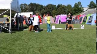 International Dog Show Baltic Winner2015, Dogue De Bordeaux