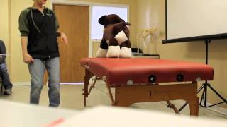 Chicago School Of Canine Massage: Canine Behavior - Approach