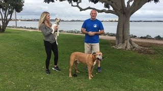 Top 5 Dog Walks in San Diego (per Desmo & Rocko)