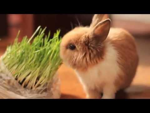 мой кролик февраль 2012