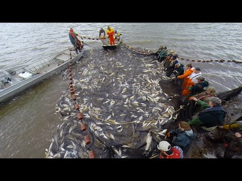 The Fight Against Asian Carp: The Unified Method