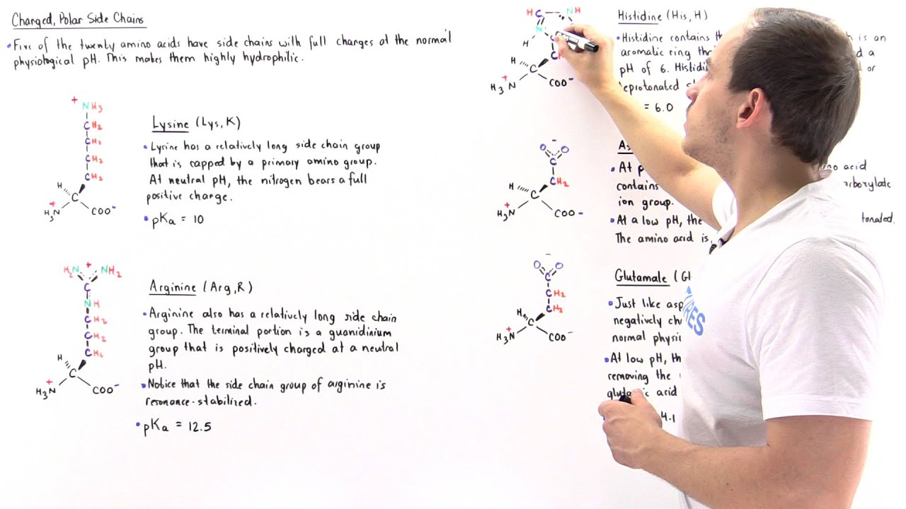 Basic and acidic amino acids youtube altavistaventures Images