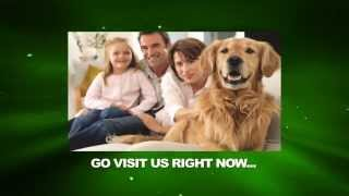 Dog Care | Puppy Care | Canine Care | Caring For Dogs And Puppies