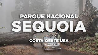 Sequoia Parque nacional. Costa Oeste USA Molaviajar