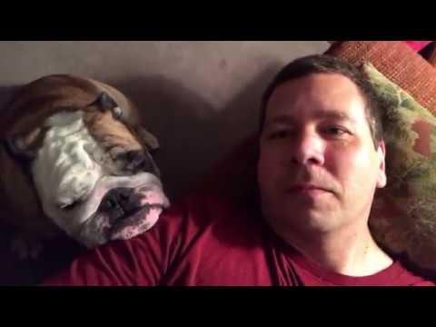 reuben-the-bulldog-the-dog-always-wins