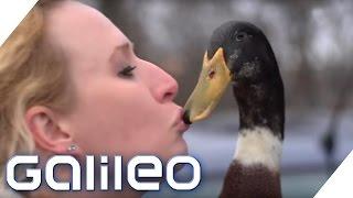 Daniel the Duck: Wie helfen Therapie-Enten? | Galileo | ProSieben