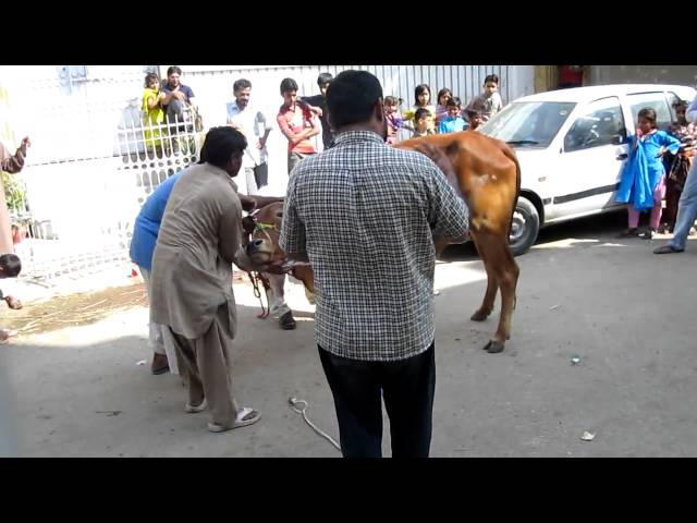 Qurbani Travel Video