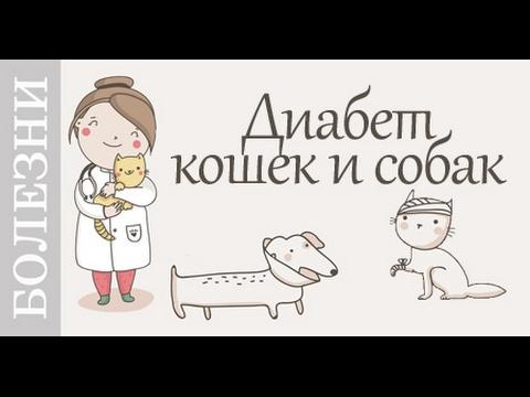 Болеют ли собаки сахарным диабетом