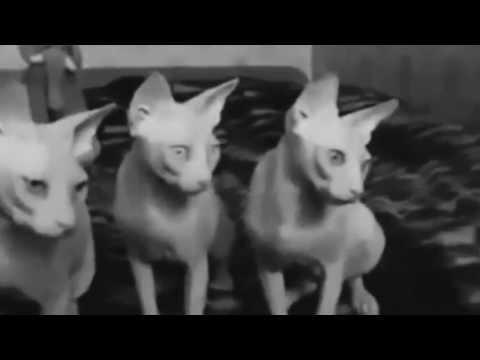 Клип Chinawoman - Friday Night