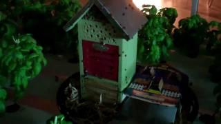 Lady Bug House Or Set Them Free To Roam?