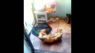 Вечная дружба кошки и собаки