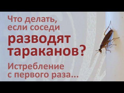 Видео: Дезинфекция от тараканов, которые бегут от бабушки-соседки. Раменки, Москва.