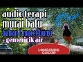 Suara Terapi Burung Murai Batu Bahan Macet Bunyi Gemericik Air  Mp3 - Mp4 Download
