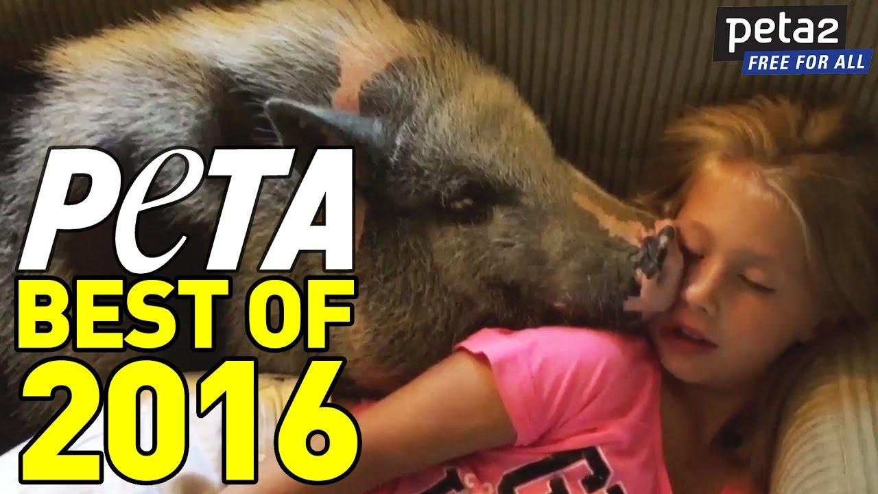 peta-rewind-best-of-2016