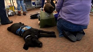 Alex and Gus- An Autistic Boy and His Service Dog
