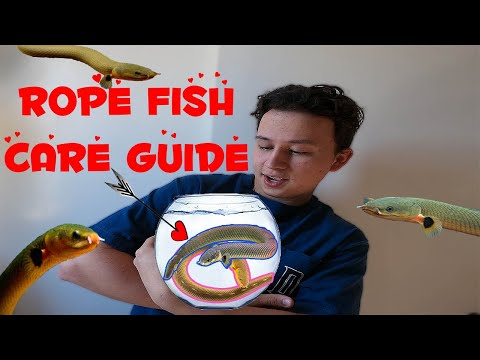 Rope Fish Care Guide