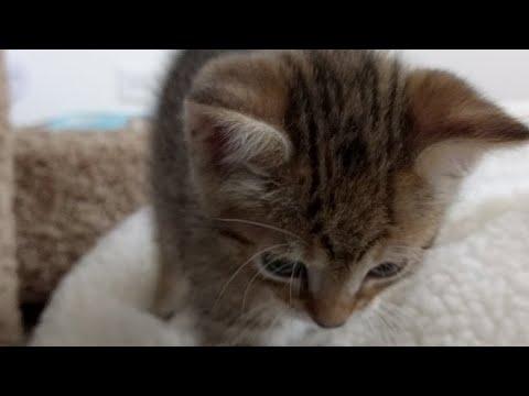 Kitten Close Up 2017-08-09