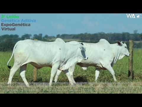 LOTE 37 - DUPLA -  REM 10114, REMC A 2059 - 3º Leilão Genética Aditiva Expogenética 2020