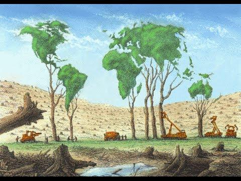 Deforestación YouTube