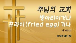 2016년 6월 12일: 병아리거나 프라이(fried egg)거나