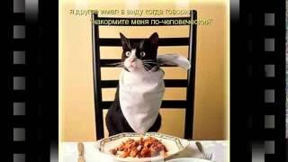 сухой корм для кошек фармина