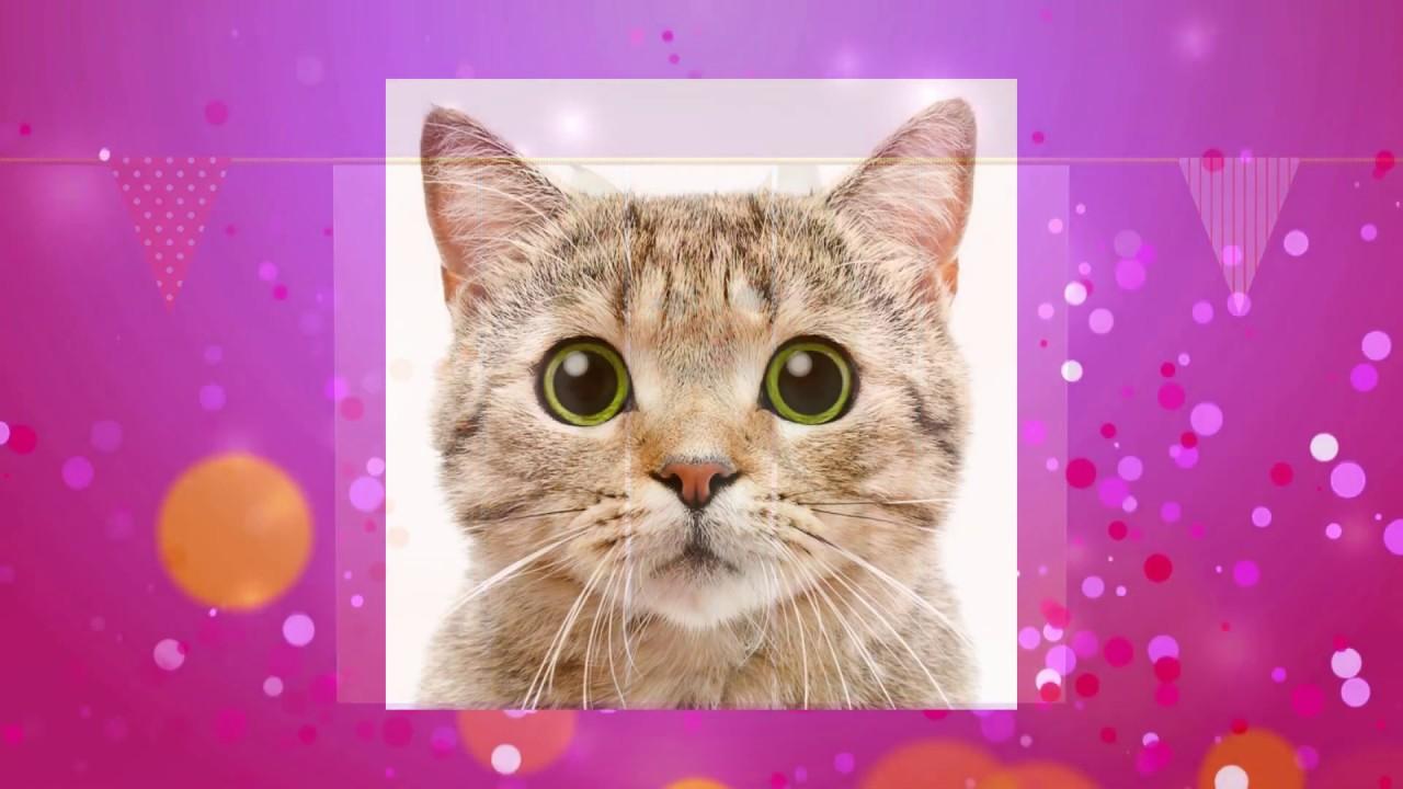 😻 Кошки славные, пушистые, забавные. 😻 С Днем Кошек.