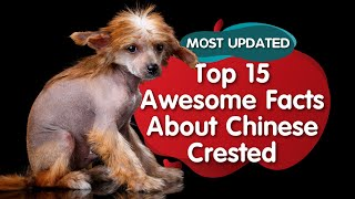 Top 15  Amazing  Facts about Chinese Crested Dogs