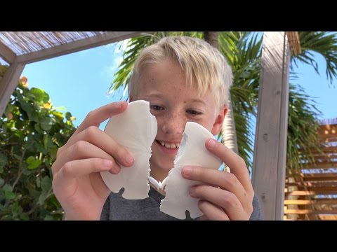 What's inside a Sand Dollar?