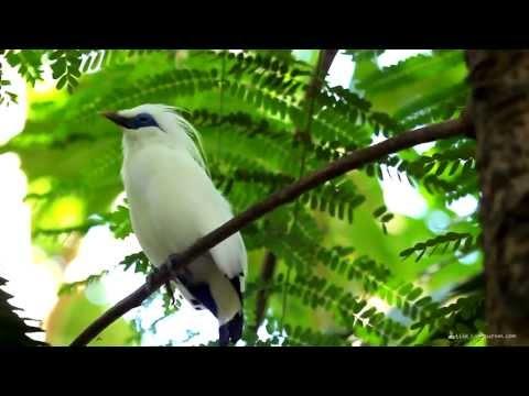 Birds of Indonesia / Птицы Индонезии