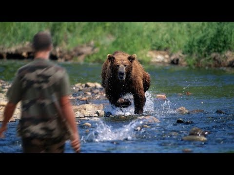 Hunters Attacked by Animals Compilation  – lion, bear, deer, elephant