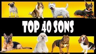 sons de latidos de cachorros, sons de vários cachorros, latidos de ...