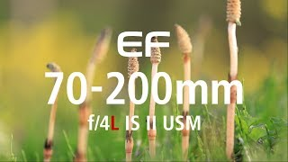 Canon EF 70-200mm f4L IS II USM GARANSI RESMI
