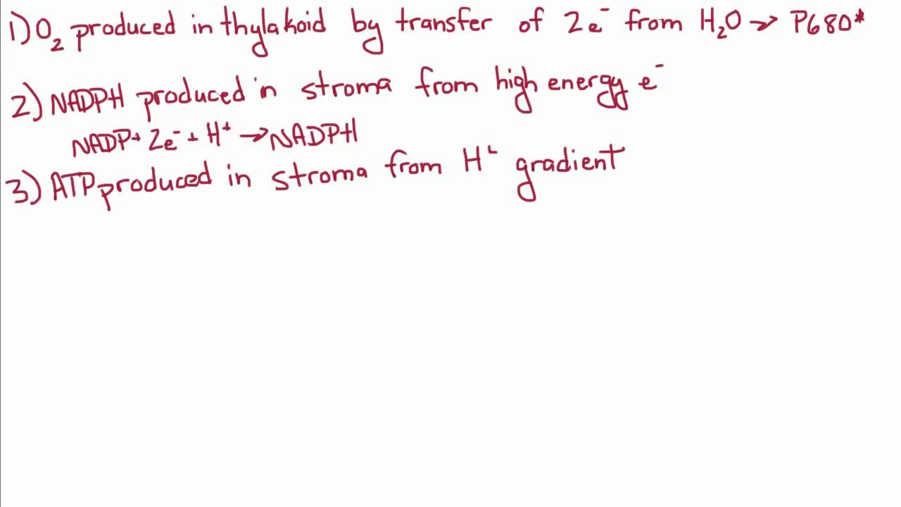 Introduction to Biology - 14 - More on Photosynthesis