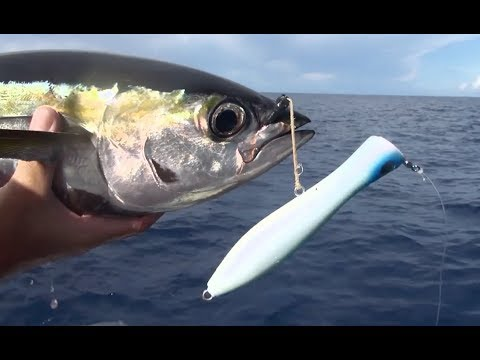 ASFN Power Angling - Popping For Yellowfin Tuna In The Seychelles