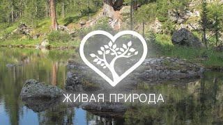 Ергаки Озеро Таёжный Глаз Телеканал Живая природа