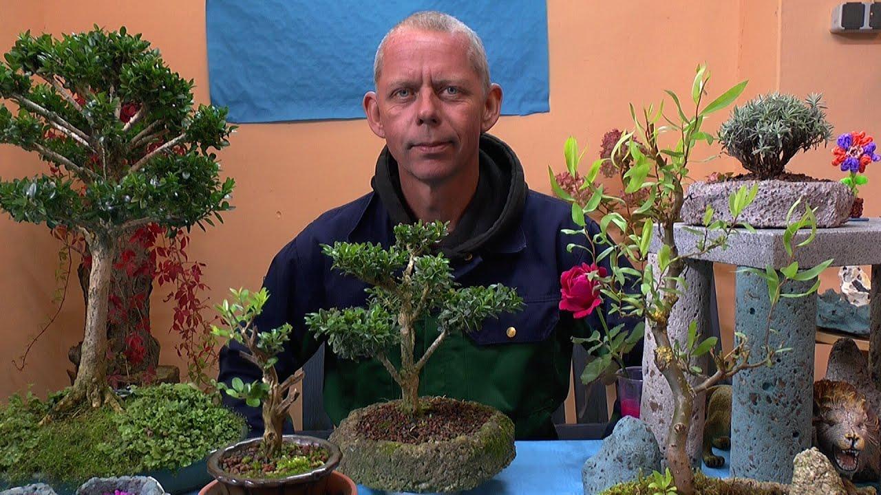 bonsai berwinterung der winterschutz unserer kleinen b ume youtube. Black Bedroom Furniture Sets. Home Design Ideas