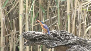 Download Video Birds of Kruger NP South Africa Part One MP3 3GP MP4