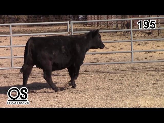 Stucky Ranch Lot 195