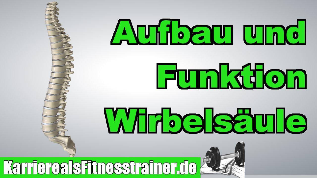 Aufbau & Funktion der Wirbelsäule | Anatomie für B-Lizenz Prüfung ...