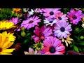 Сборник красивой музыки для души (музыка цветов) !!!