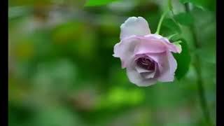 ดอกไม้เพื่อมวลชน